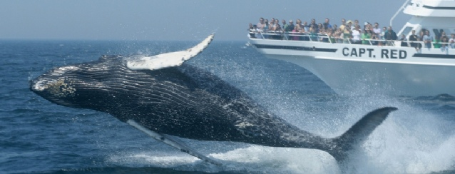 Massachusetts Whale watching off the Atlantic Coast - See America - Visit USA Travel Guide